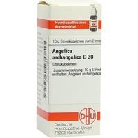 ANGELICA ARCHANGELICA D30