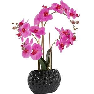 Kunstpflanze Orchidee Orchidee, Leonique, Höhe 55 cm lila 20 cm x 55 cm x 11 cm