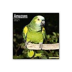 Amazons - Amazonenpapageien 2021 - Kalender