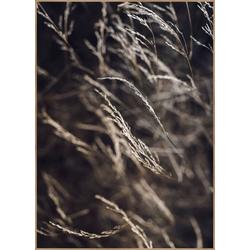 Poster MELLOW GRASSES 7 (BH 70x100 cm)