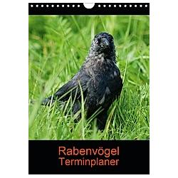 Rabenvögel Terminplaner (Wandkalender 2021 DIN A4 hoch)