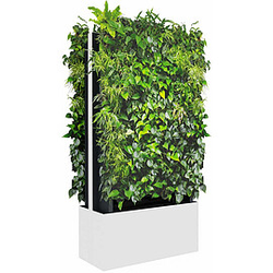C+P Mobile Pflanzenwand für beidseitige Bepflanzung, b80xt40xh163cm