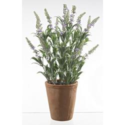 Dekopflanze Lavendel (H 42 cm) Casa Nova