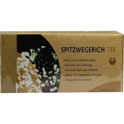 Spitzwegerichtee