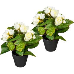 Künstliche Zimmerpflanze Eleonore Begonien, DELAVITA, Höhe 24 cm, 2er Set weiß 15 cm x 24 cm
