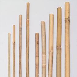 Gardissimo Bambus Pflanzstab Tonkinstab Bambusrohr 120 - 180cm
