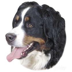 Nobby Aufkleber Berner Sennenhund