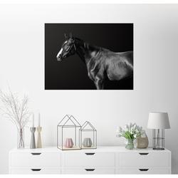 Posterlounge Wandbild, Budjonny (Pferd) 80 cm x 60 cm