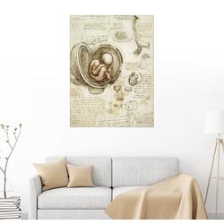 Posterlounge Wandbild, Studien des Embryos 60 cm x 80 cm