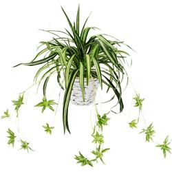 Kunstpflanze Wasserlilie Wasserlilie, Höhe 35 cm, im Übertopf