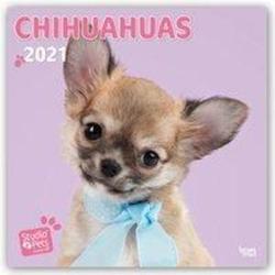Too Cute Chihuahua - Chihuahuas 2021 - 18-Monatskalender