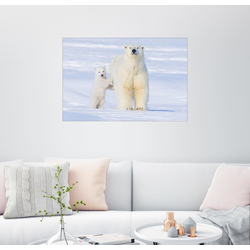 Posterlounge Wandbild, Eisbärfamilie 90 cm x 60 cm