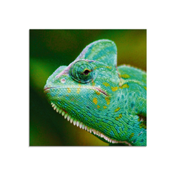 Artland Glasbild Jemenchamäleon Portrait, Reptilien (1 Stück) 30 cm x 30 cm x 1,1 cm