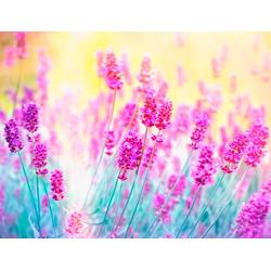 Fototapete Lavender Flower, glatt 3,50 m x 2,60 m