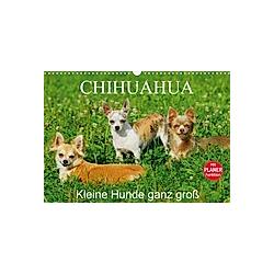 Chihuahua - Kleine Hunde ganz groß (Wandkalender 2021 DIN A3 quer)
