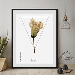 andas Bild Pflanze, mit Rahmen 50 cm x 60 cm x 2,4 cm