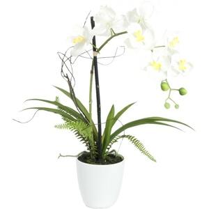 EUROPALMS Orchideen-Arrangement 1
