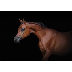 Consalnet Papiertapete Braunes Pferd, Motiv 2,54 m x 1,84 m