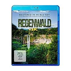 Regenwald 4K - DVD  Filme