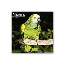 Amazons - Amazonenpapageien 2021
