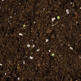 Compo Sana Qualitäts-Blumenerde 50% weniger Gewicht 25 l