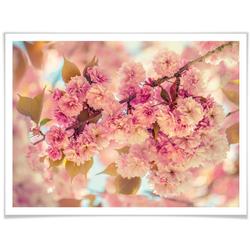 Wall-Art Poster Kirschblüten, Natur (1 Stück) 80 cm x 60 cm x 0,1 cm