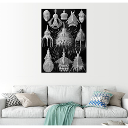 Posterlounge Wandbild, Cyrtoidea (Kunstformen der Natur: Grafik 31) 60 cm x 80 cm