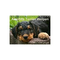 Airedale Terrier Welpen (Tischkalender 2021 DIN A5 quer)