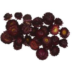 Kunstpflanze Strohblumenköpfe in Box, VBS, 20 - 30 g rot
