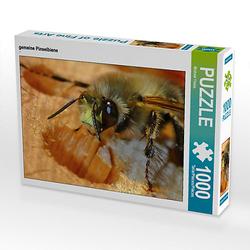 gemeine Pinselbiene Lege-Größe 64 x 48 cm Foto-Puzzle Bild von Michis Fotogalerie Puzzle