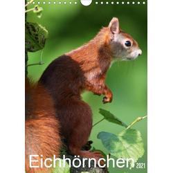 Eichhörnchen / Geburtstagskalender (Wandkalender 2021 DIN A4 hoch)