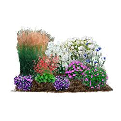 BCM Beetpflanze Blütenzauber Set, 18 Pflanzen