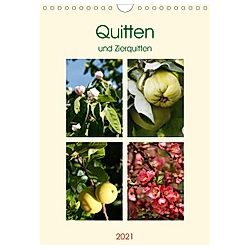 Quitten und Zierquitten (Wandkalender 2021 DIN A4 hoch)