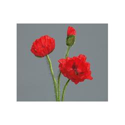Mohn in rot, 48 cm