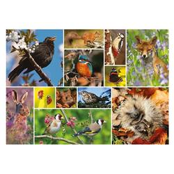 Otter House Puzzle RSPB Great British Wildlife 1000 Teile Puzzle, Puzzleteile bunt