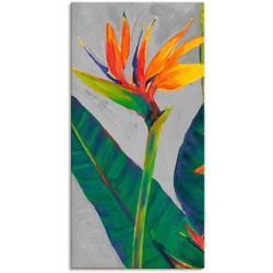 Artland Wandbild Paradiesvogel I, Pflanzen (1 Stück) 30 cm x 60 cm