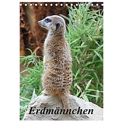 Erdmännchen (Tischkalender 2021 DIN A5 hoch)