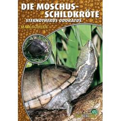Die Moschusschildkröte als Buch von Maik Schilde