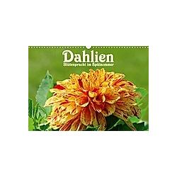 Dahlien - Blütenpracht im Spätsommer (Wandkalender 2021 DIN A3 quer)
