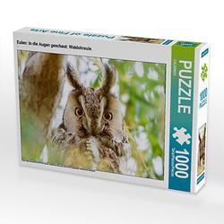 Eulen: In die Augen geschaut: Waldohreule. Lege-Größe 64 x 48 cm Foto-Puzzle Puzzle