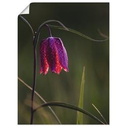 Artland Wandbild Leuchtende Schachbrettblume, Blumen (1 Stück) 45 cm x 60 cm