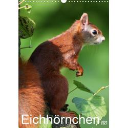 Eichhörnchen / Geburtstagskalender (Wandkalender 2021 DIN A3 hoch)