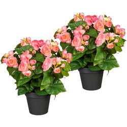 Künstliche Zimmerpflanze Eleonore Begonien, DELAVITA, Höhe 28 cm, 2er Set rosa