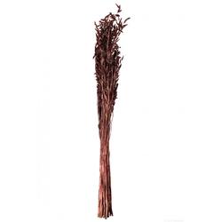Hafer Pflanze(LBH 75x10x10 cm)