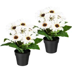 Künstliche Zimmerpflanze Elaine Gerbera, my home, Höhe 27 cm, 2er Set weiß