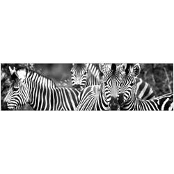 Küchenrückwand fixy Zebra herd schwarz 220 cm