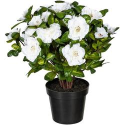 Künstliche Zimmerpflanze Wolga Azalee, DELAVITA, Höhe 32 cm weiß