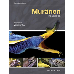 Muränen im Aquarium als Buch von Marco Lichtenberger