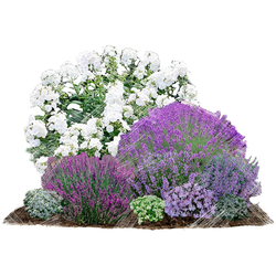 BCM Beetpflanze Bienenfreundlich Set, 9 Pflanzen