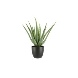 Aloe im Topf ¦ grün ¦ Kunststoff Ø: 25